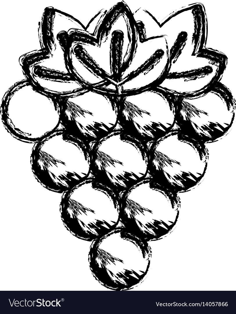 Contour grapes fruit icon image vector image