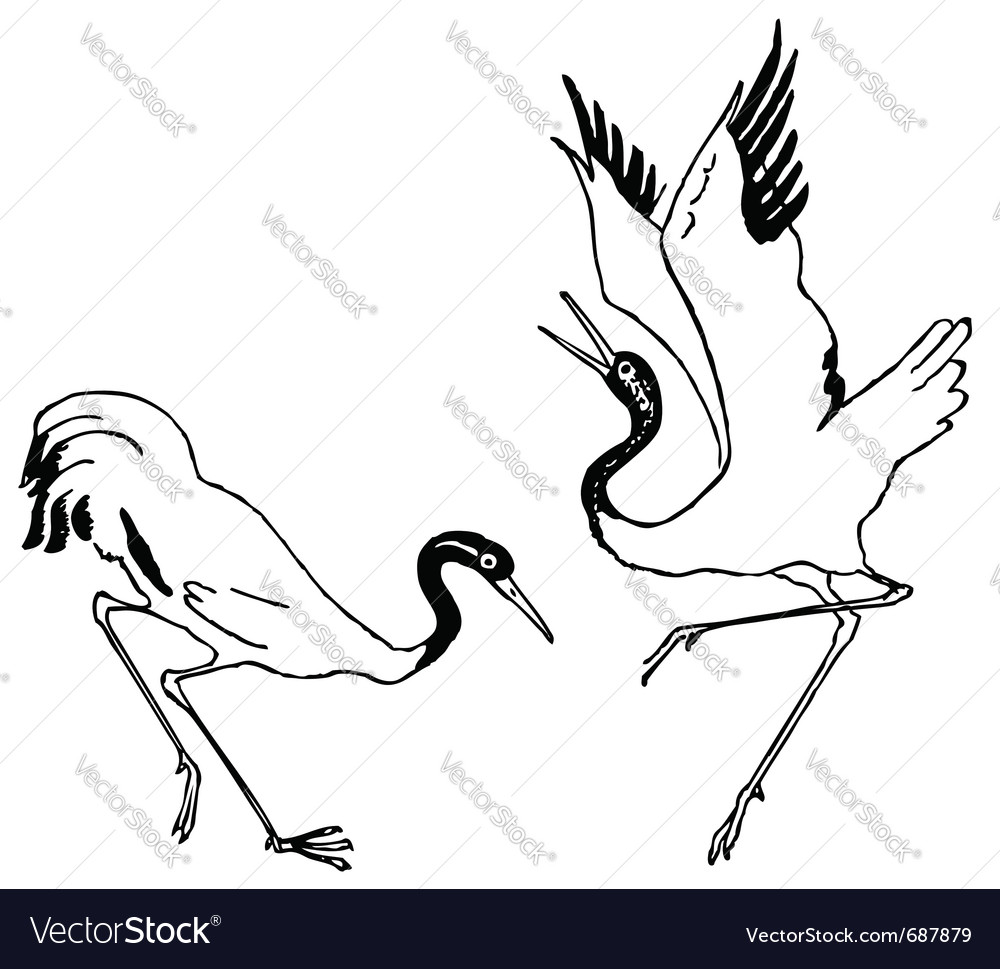 Crane birds vector image