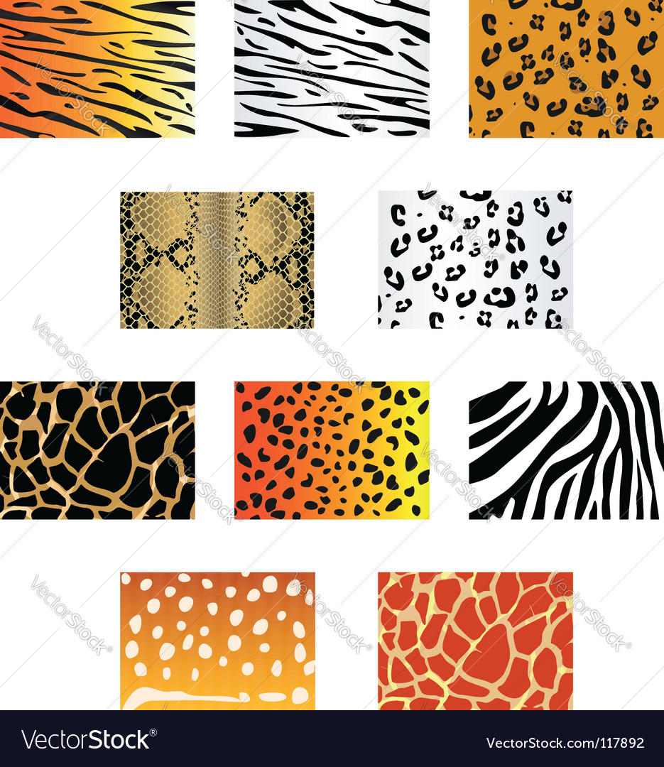 Animal fur and skin vector image