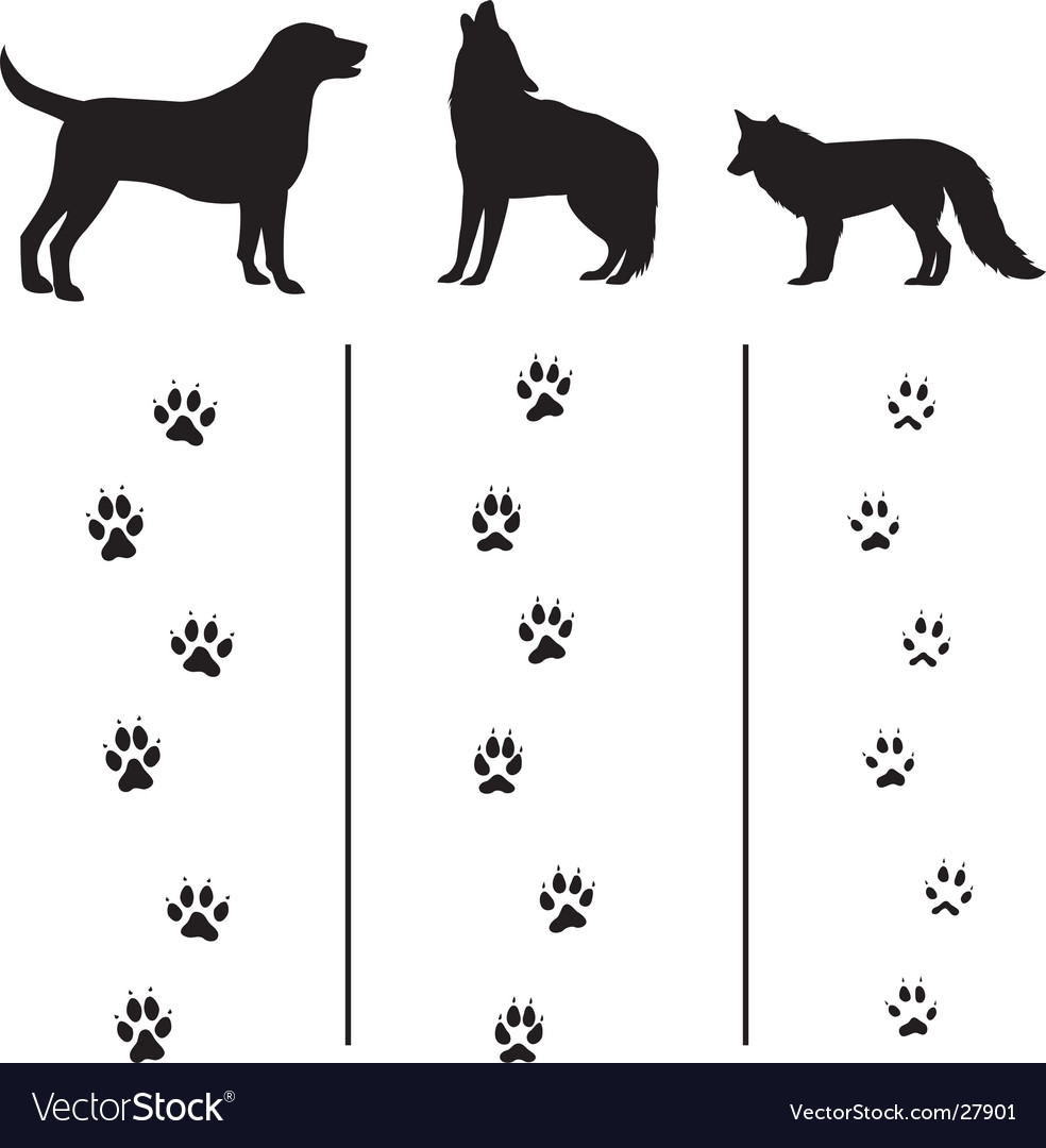Canine tracks and silhouettes vector image