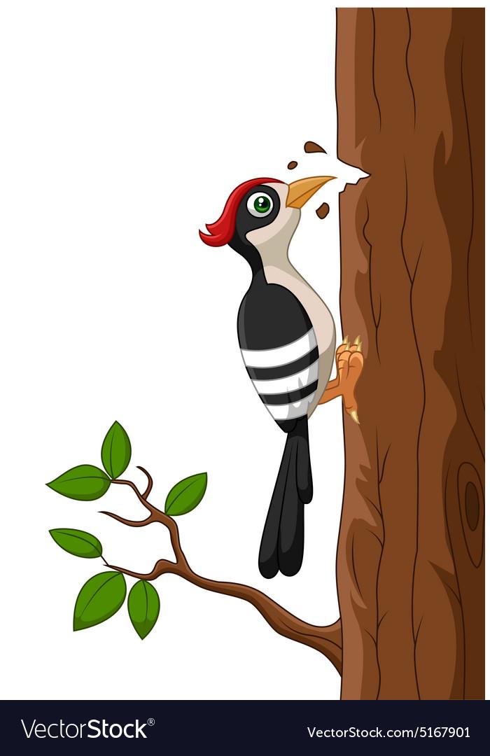 Woodpecker bird cartoon Royalty Free Vector Image