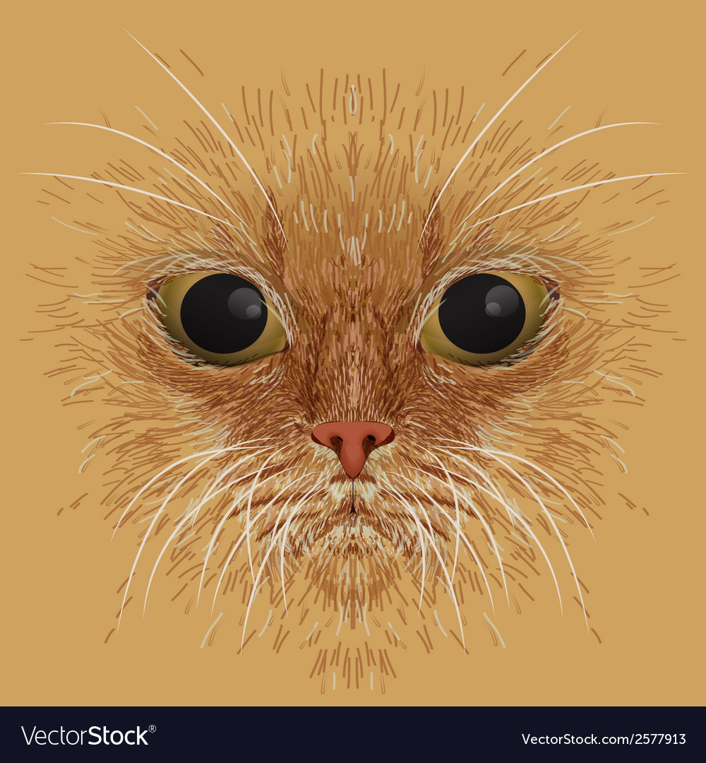 Red cat muzzle background vector image