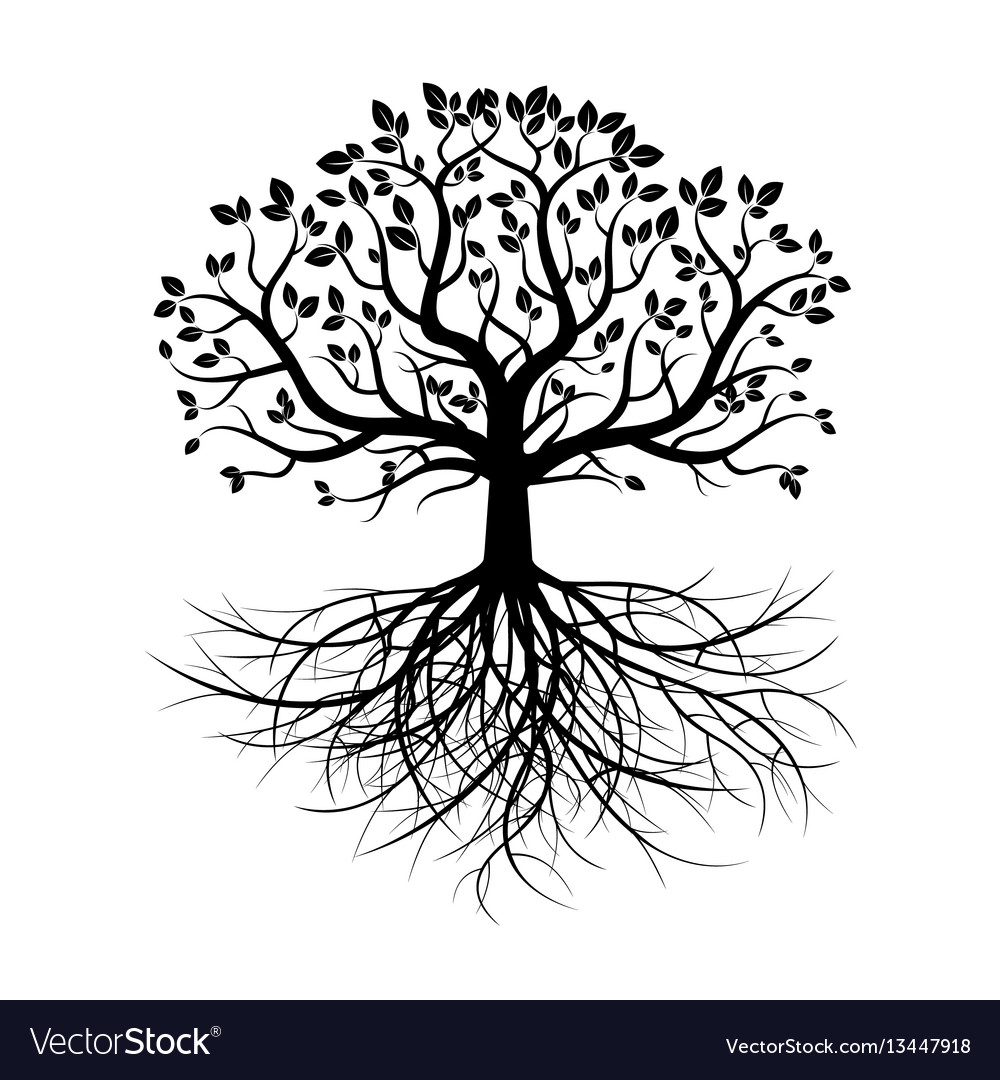 Black old tree and roots vector image