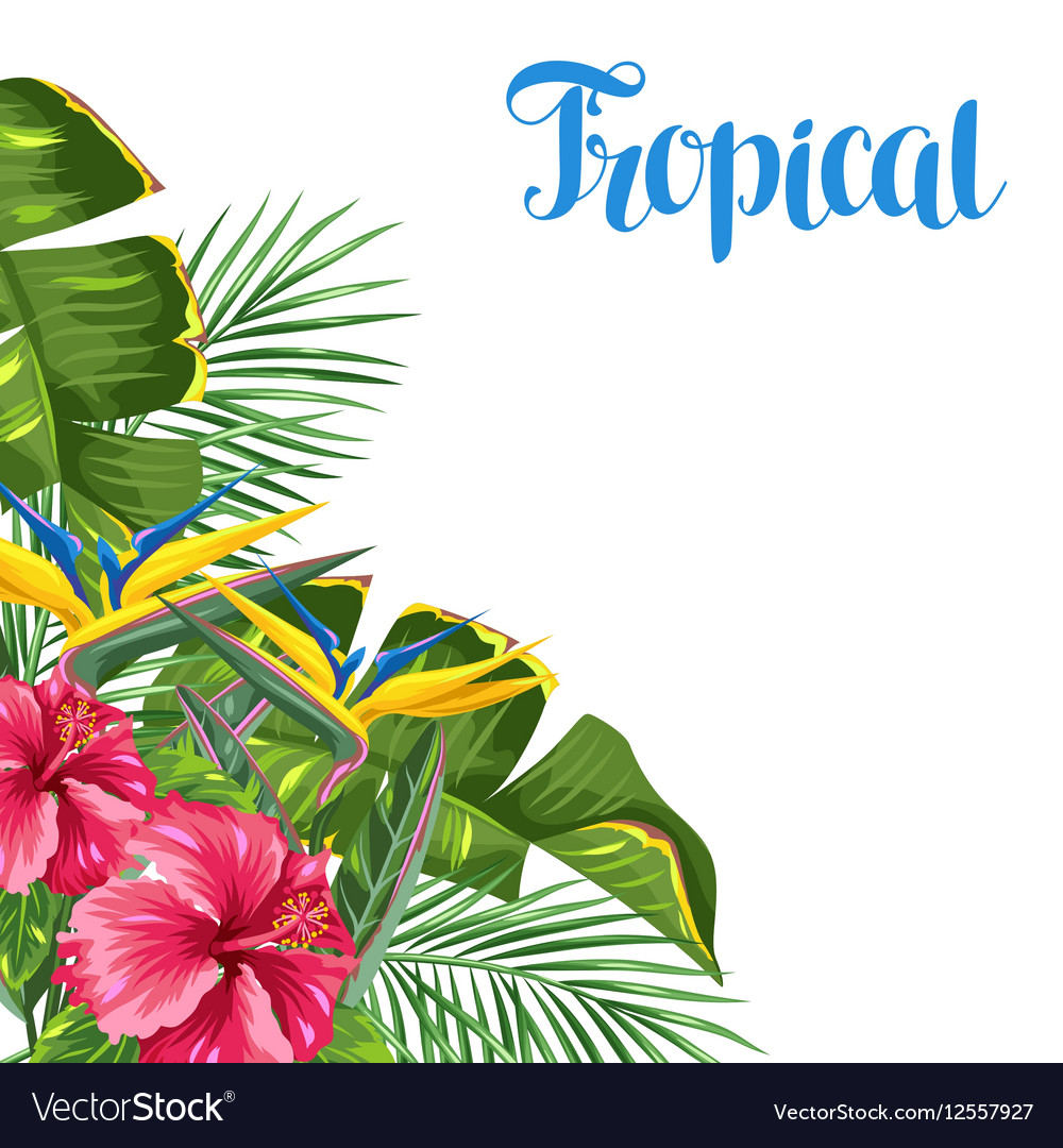 Invitation card with tropical leaves and flowers vector image stopboris Images