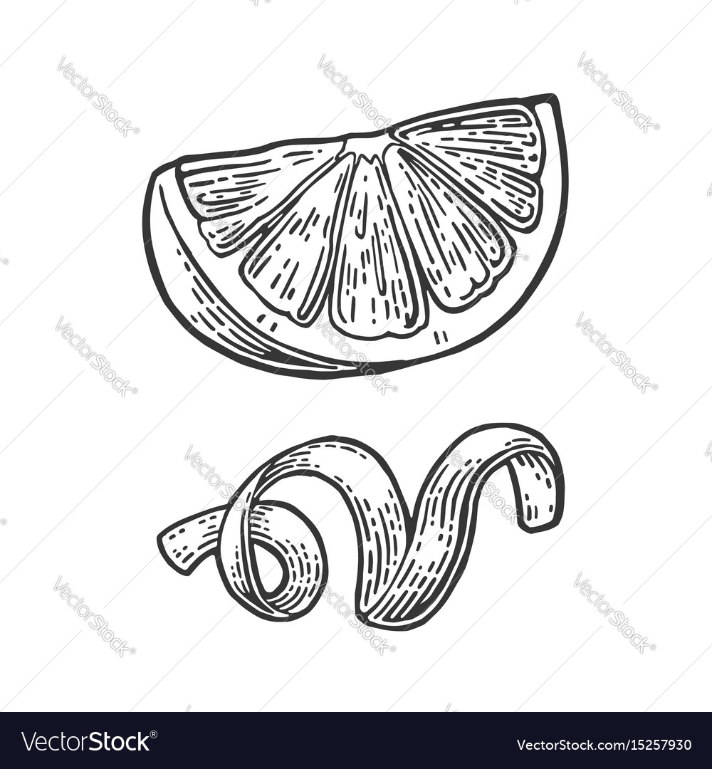Lemon slice and peel twirled black vintage vector image