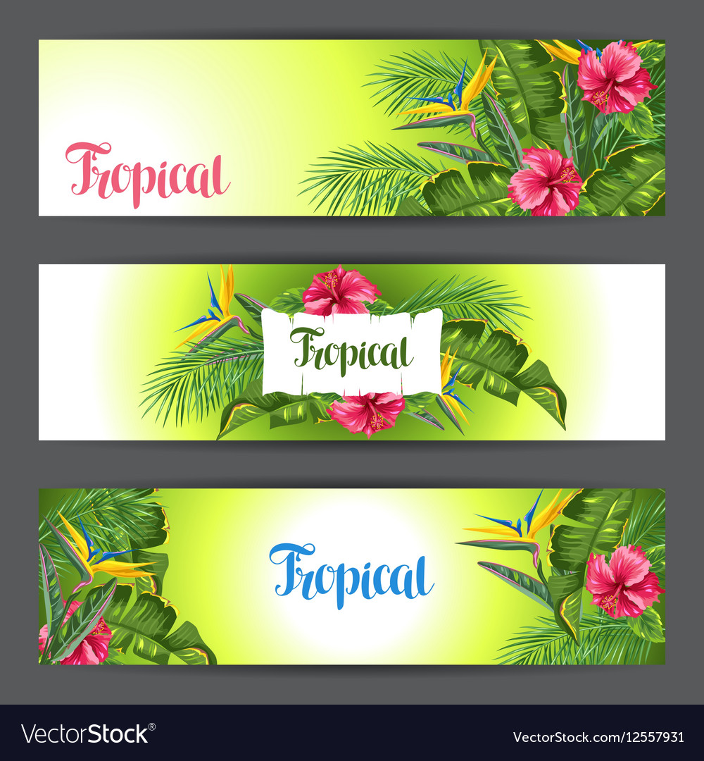 Banners with tropical leaves and flowers Palms vector image