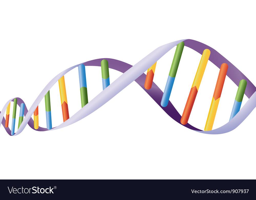 DNA helix Vector Image