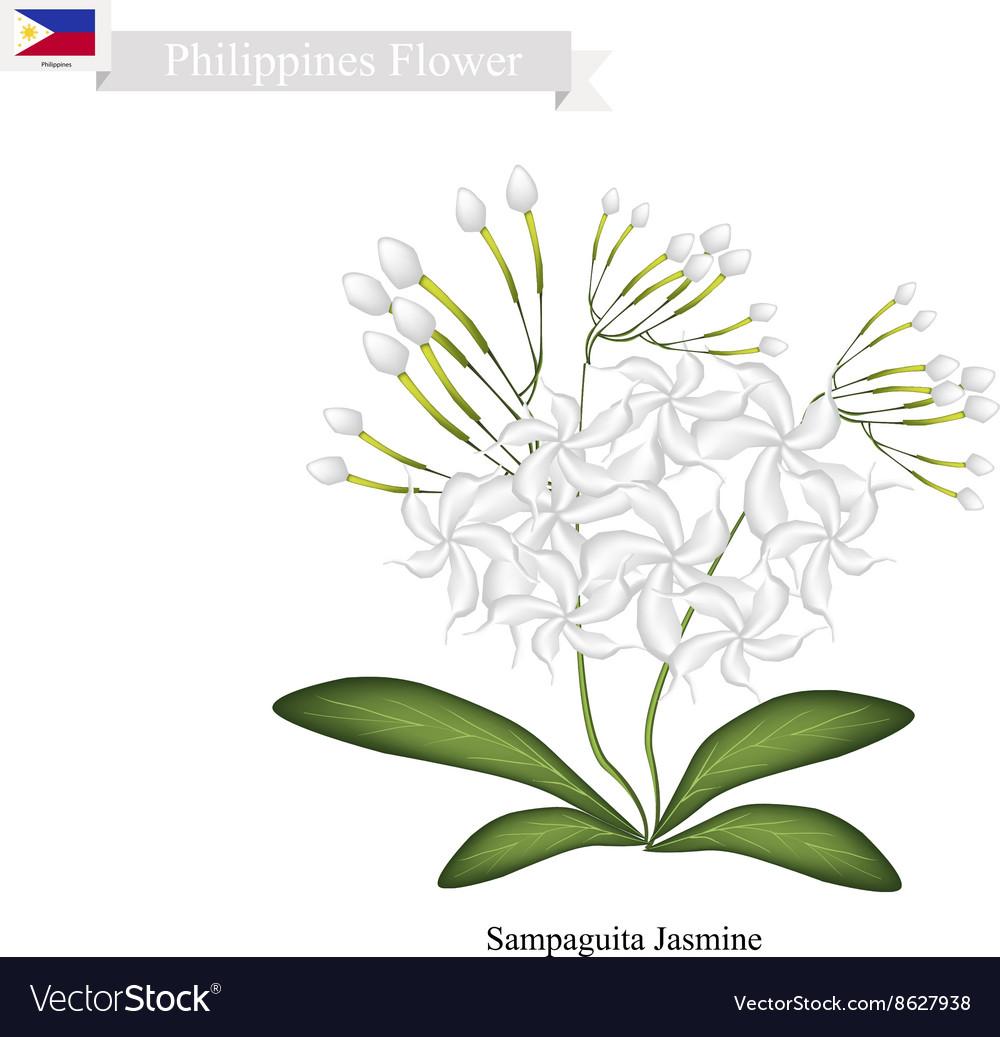 Filipino national flower tattoo flowers healthy filipino national flower tattoo flowers healthy tattoo design and style celebrity playing cards national flower of jasmine flower tattoo design choice izmirmasajfo
