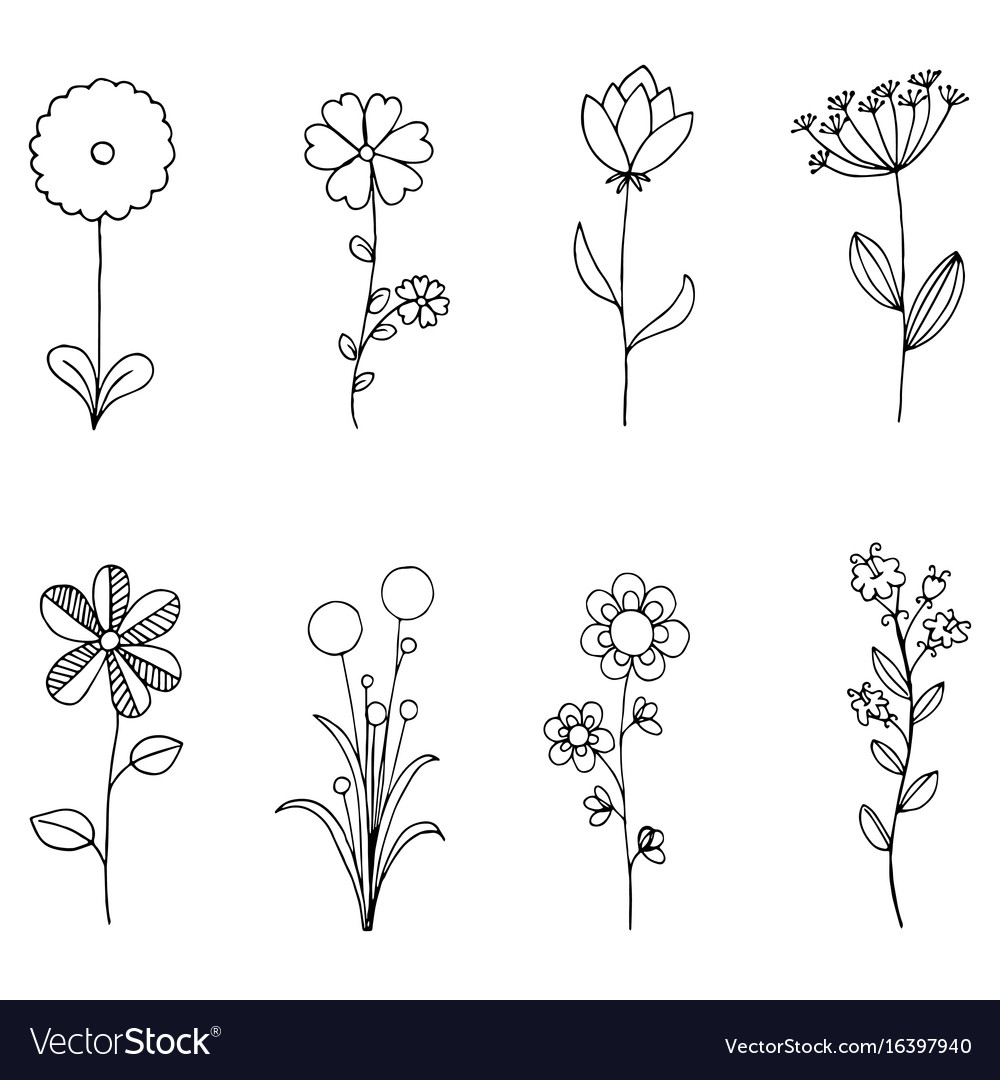 Set of doodle flora wild and nature flowers on vector image