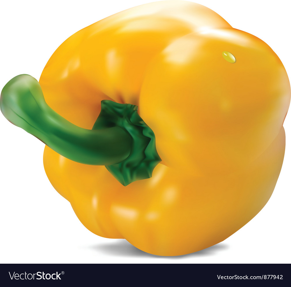 Yellow paprika vector image