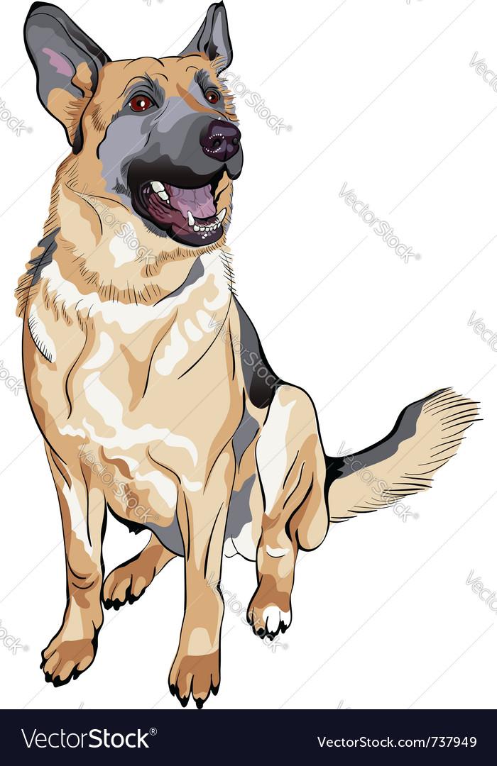 German shepherd breed Vector Image