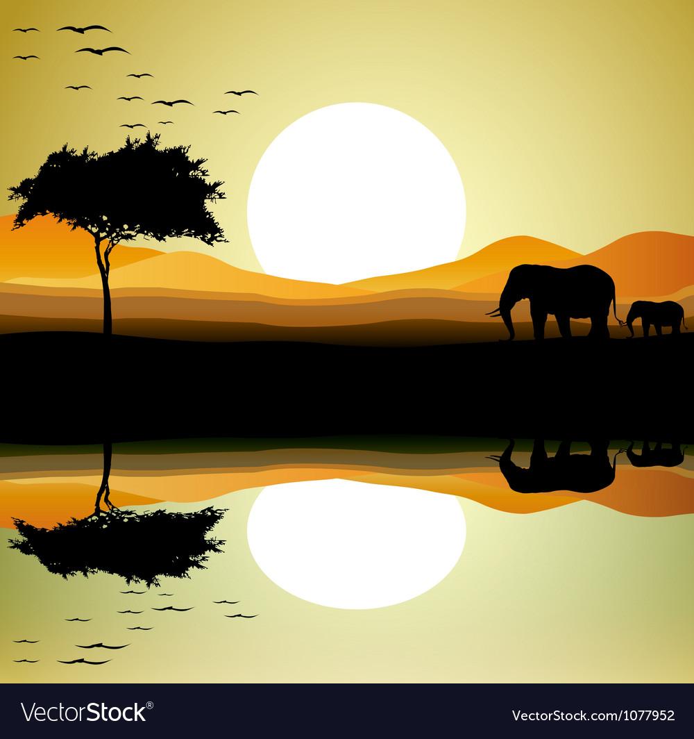 Safari of elephant silhouette vector image