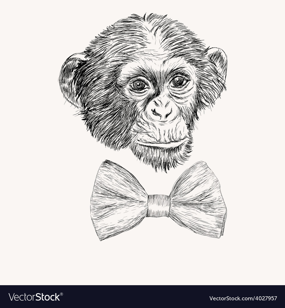 sketch monkey face with bow tie hand drawn doodle vector image
