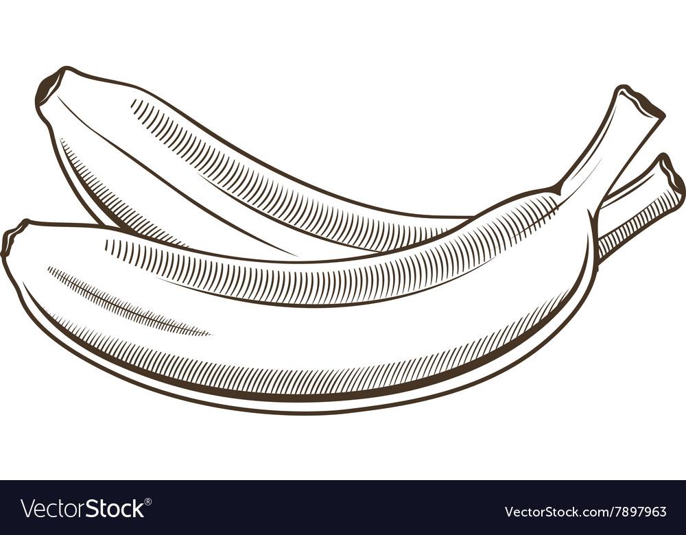 Bananas in vintage style Line art vector image