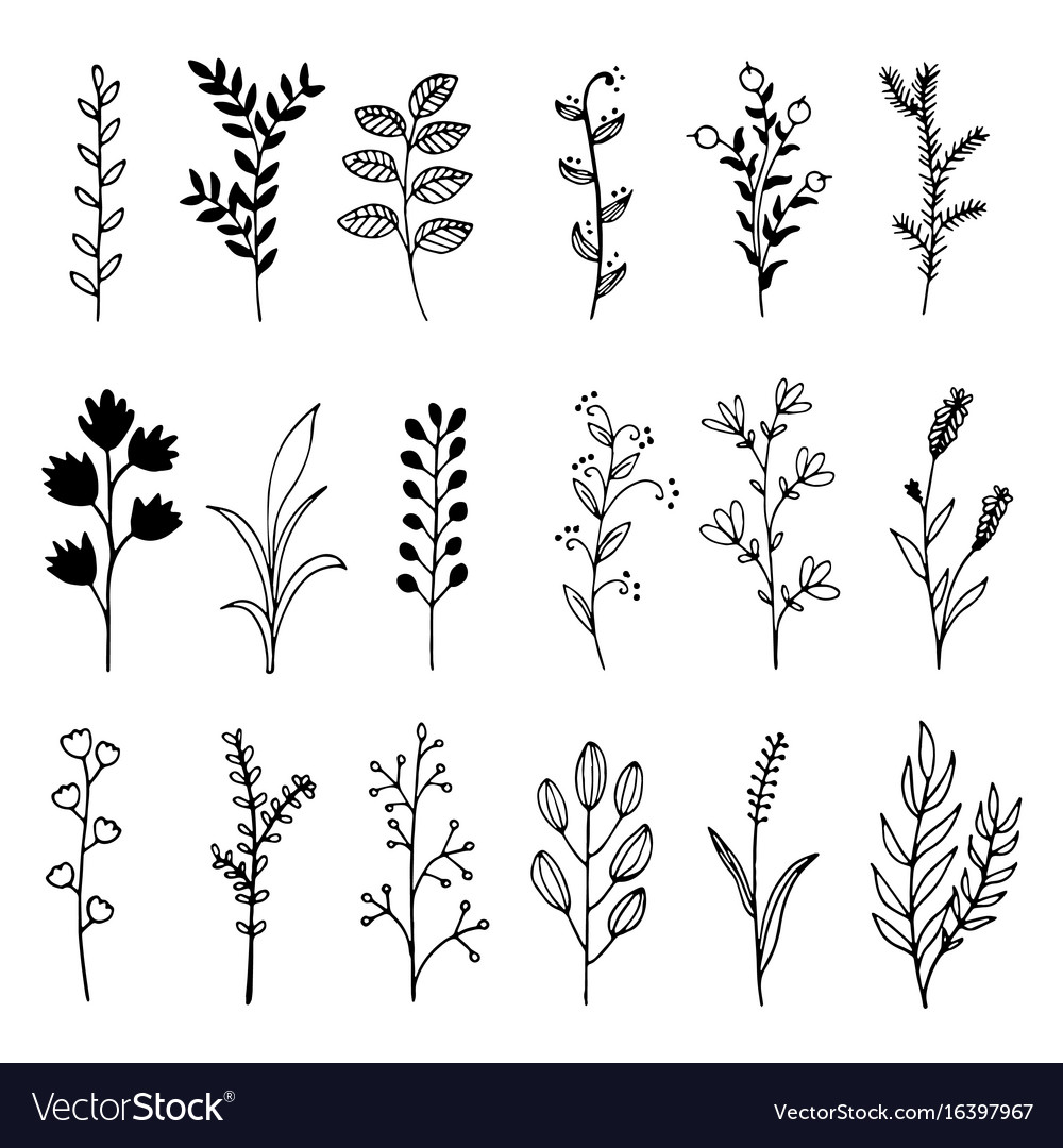 Hand drawn boughs with leaves doodle wild floral vector image