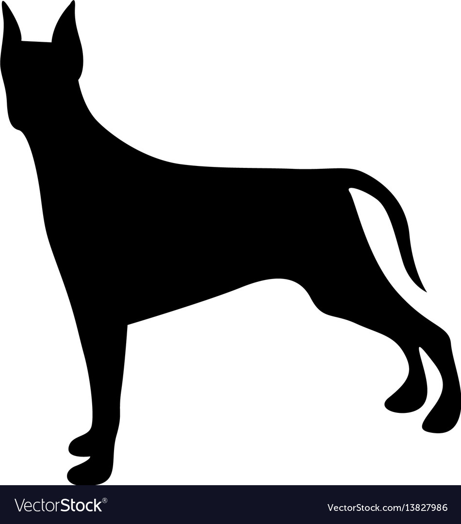 Black figure doberman pinscher dog animal vector image