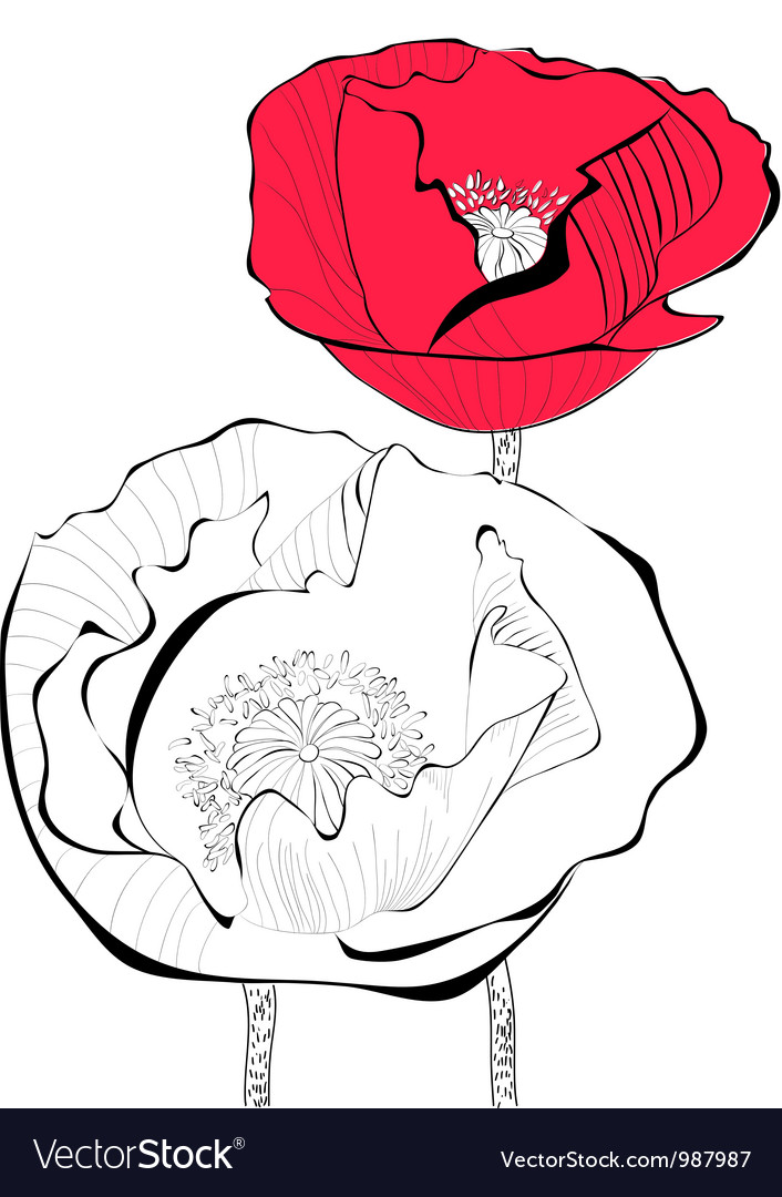 Stylized Poppy flower vector image
