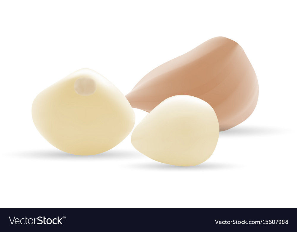 Garlic and garlic bulb isolated on a white vector image