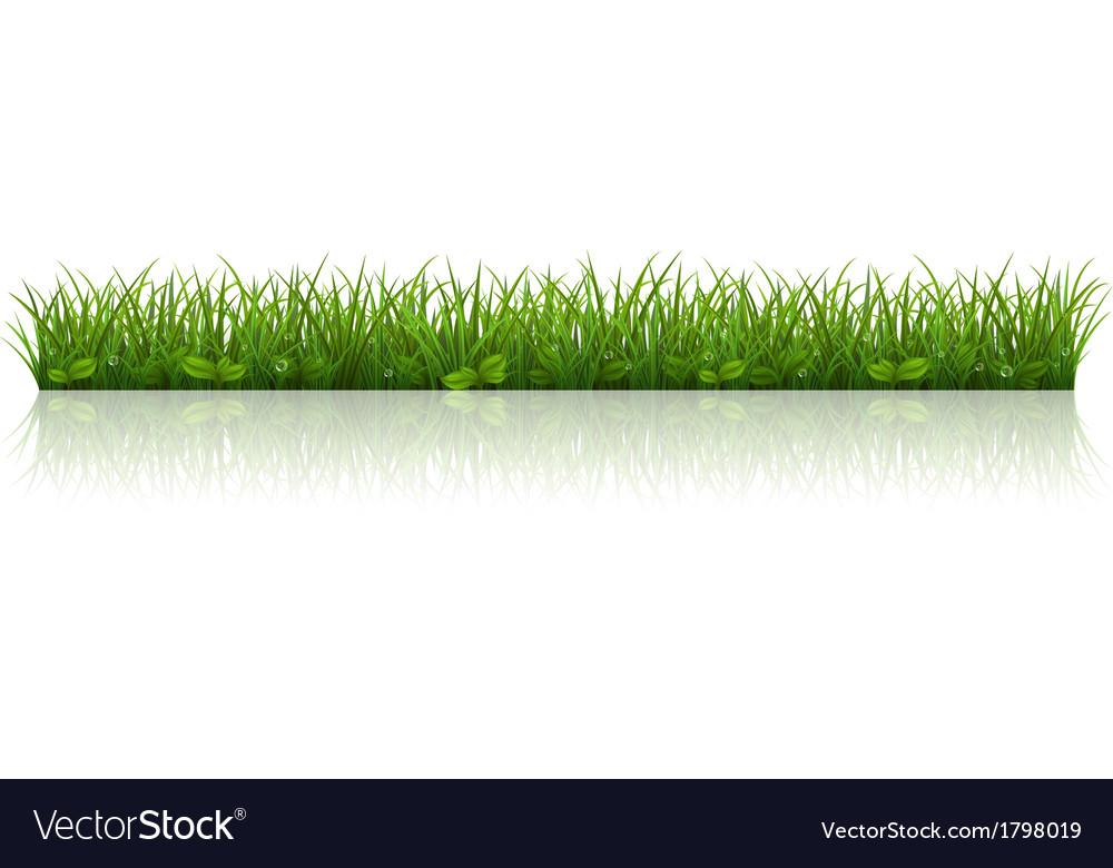 Beautiful green grass vector image