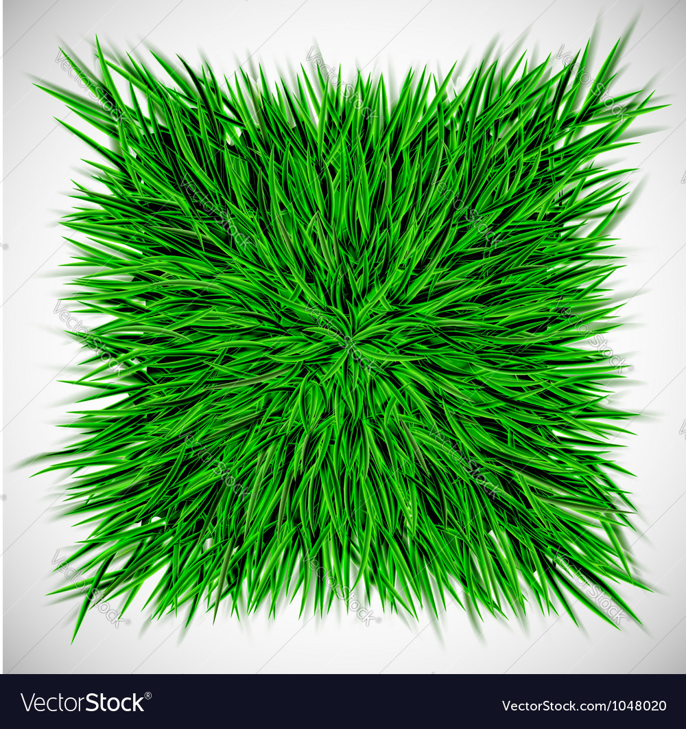 Background with square of grass vector image