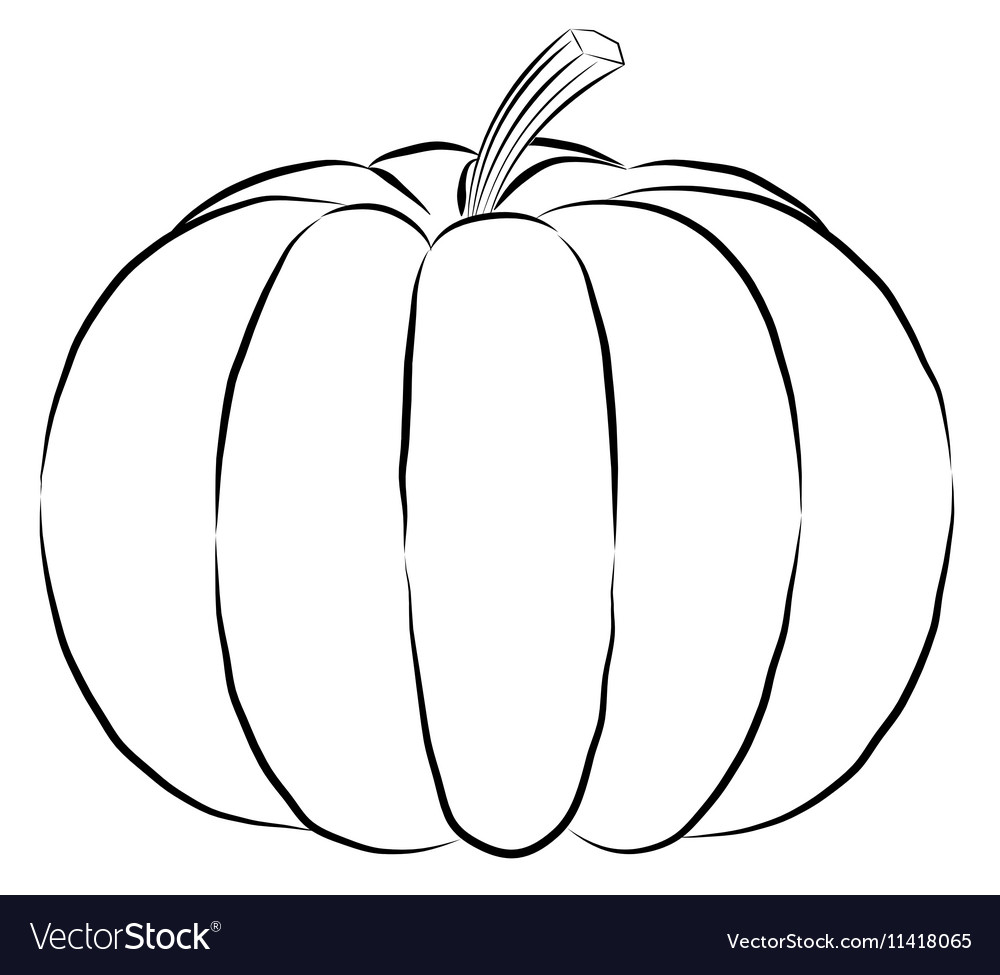 Outline pumpkin black fine lines and spine vector image