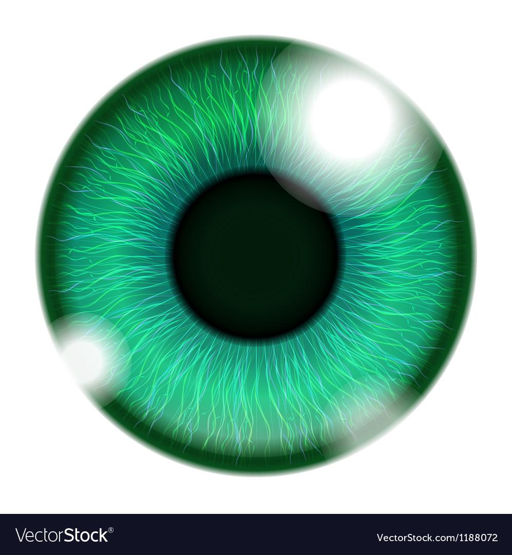Human Green Eye vector image
