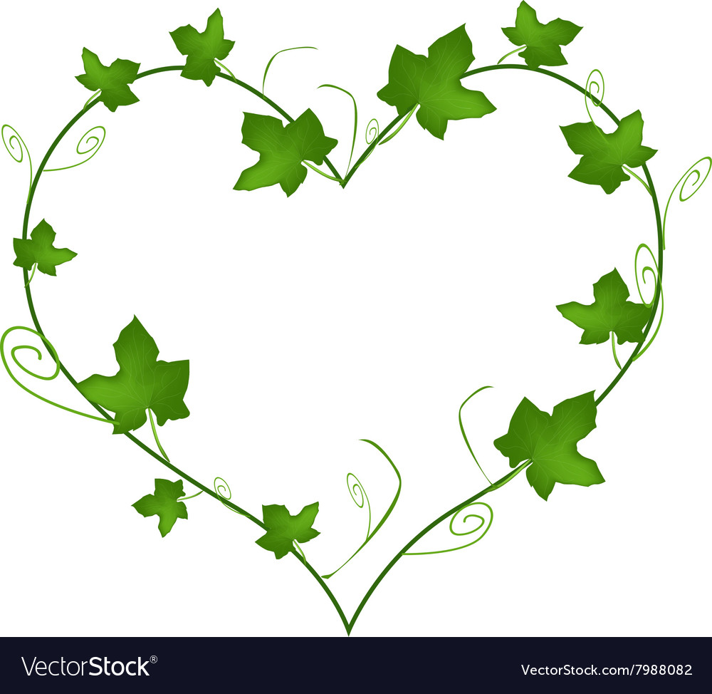 Green Ivy Leaves in Beautiful Heart Shape vector image
