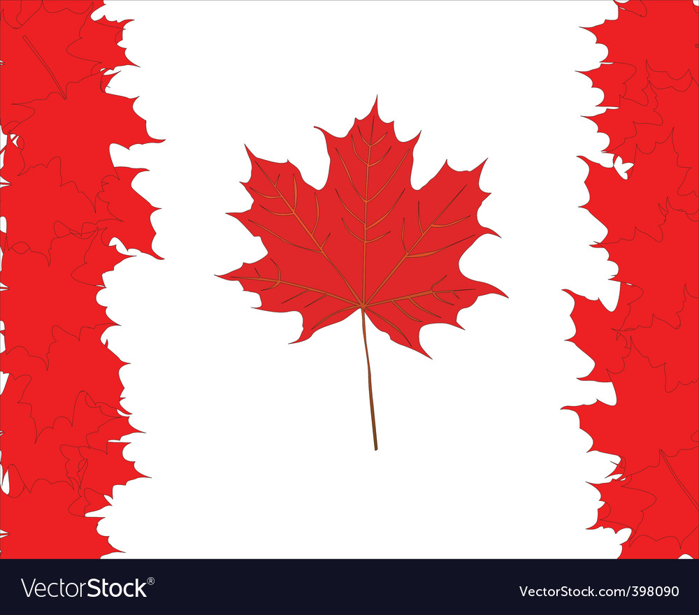 Canadian maple leaves symbol vector image