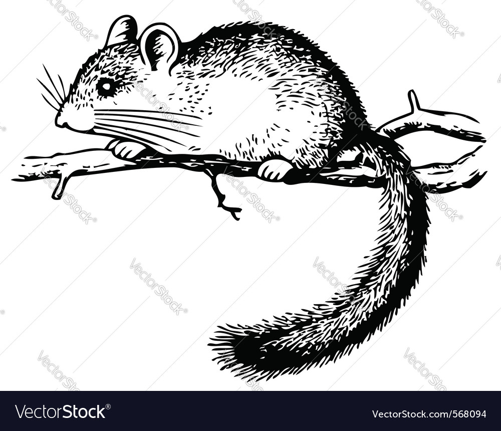 Edible dormouse vector image