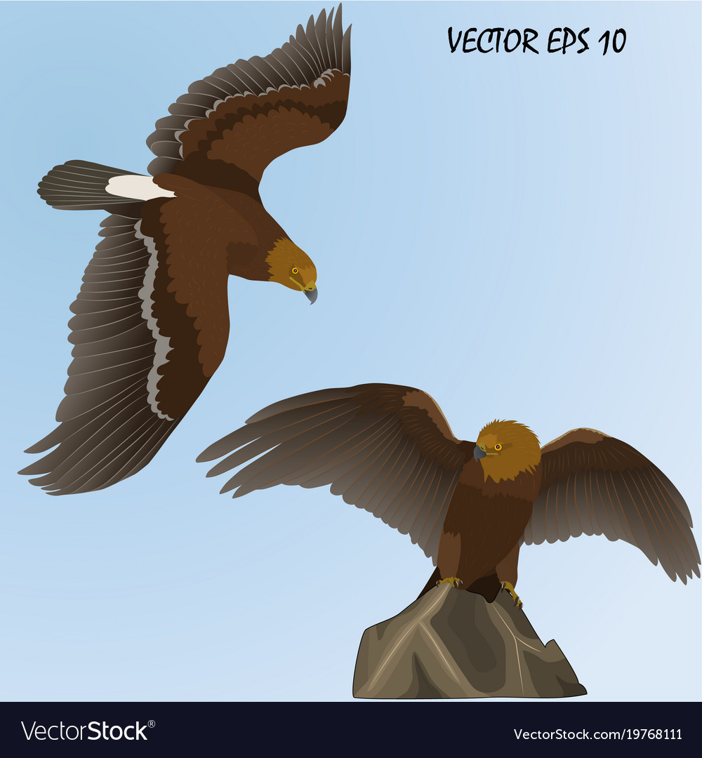 Two realistic golden eagles vector image