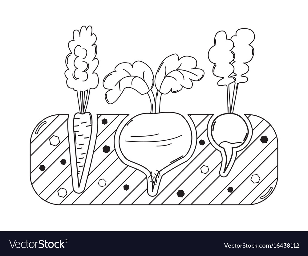 Thin line gardening bed with vegetables vector image