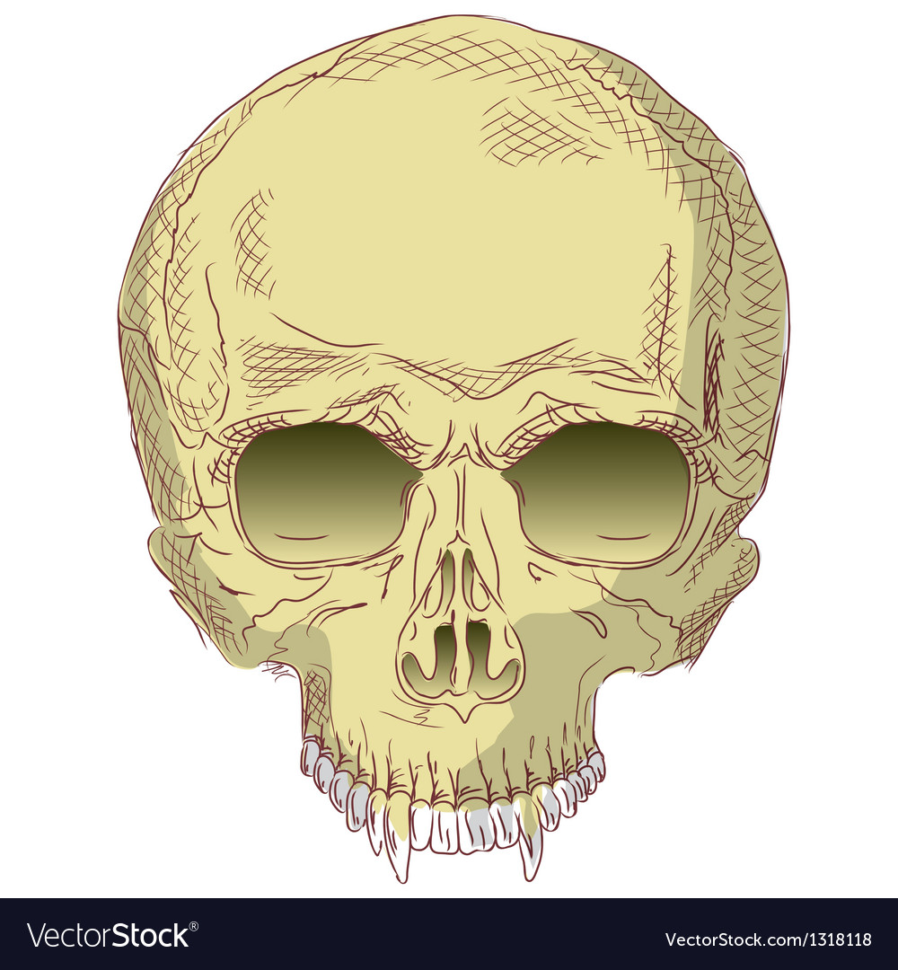 The human skull vector image