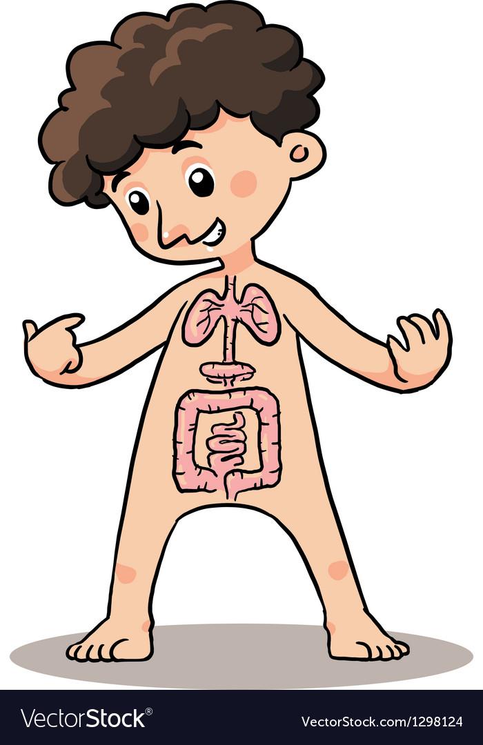 Child Body Organ vector image