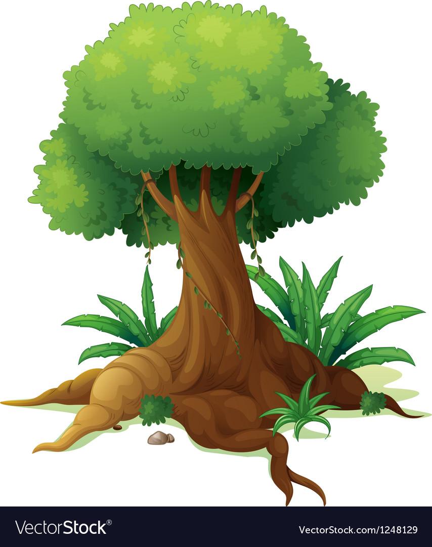 A big tree vector image