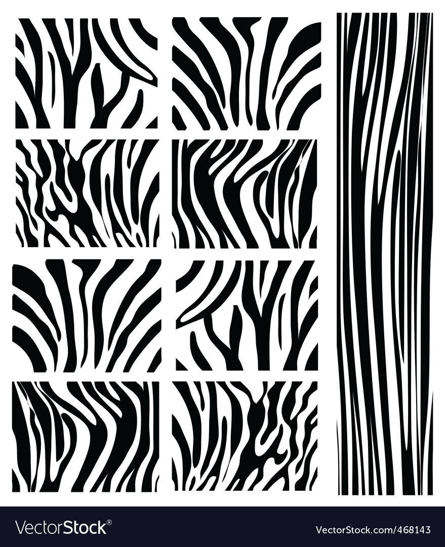 Zebra patterns vector image