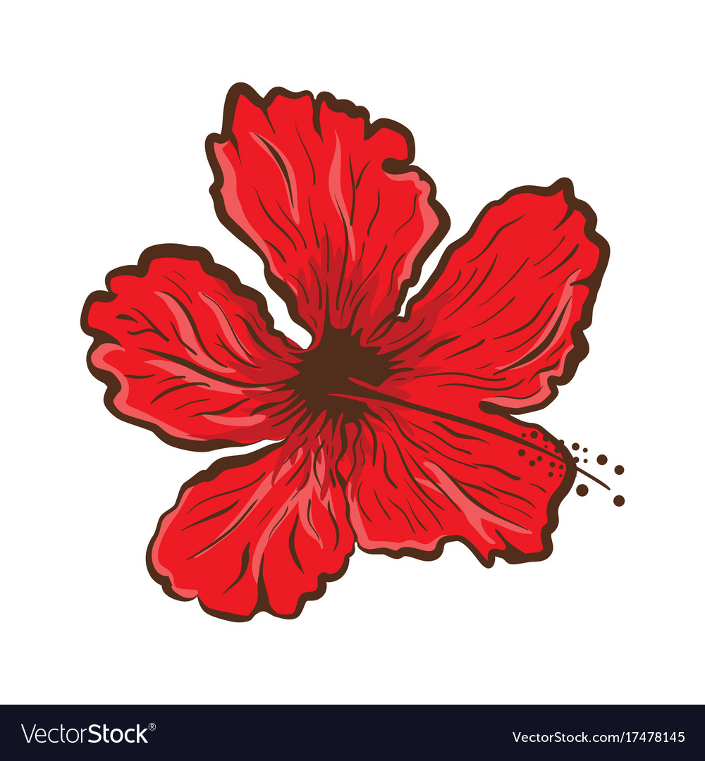 Hibiscus flower in tattoo style graphic tropical vector image
