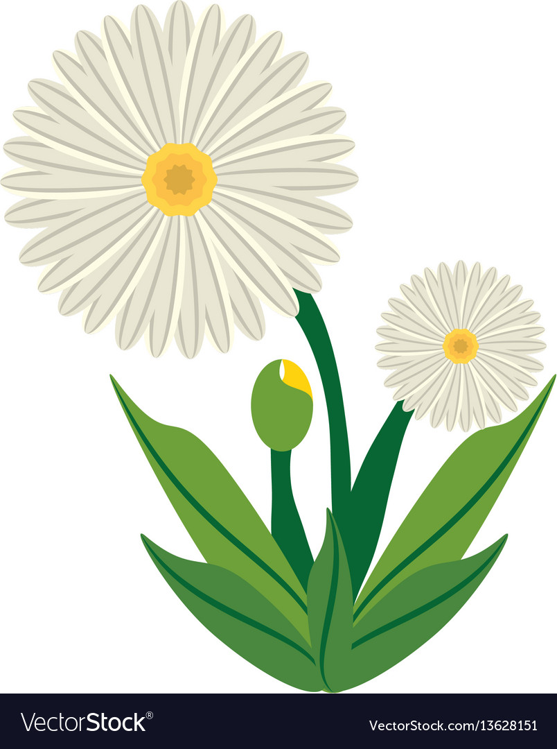 Daisy flower image icon vector image