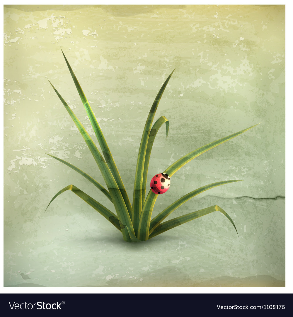 Ladybug and grass old-style vector image