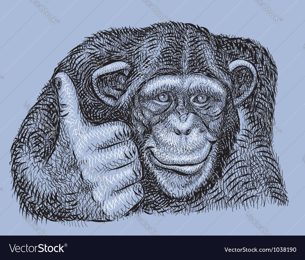 Chimpanzee drawing vector image