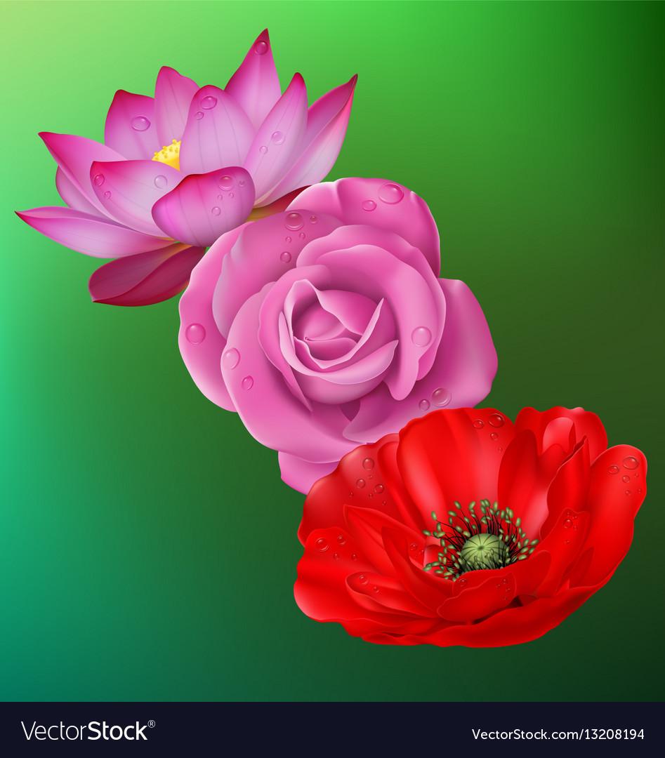 Realistic flower set vector image