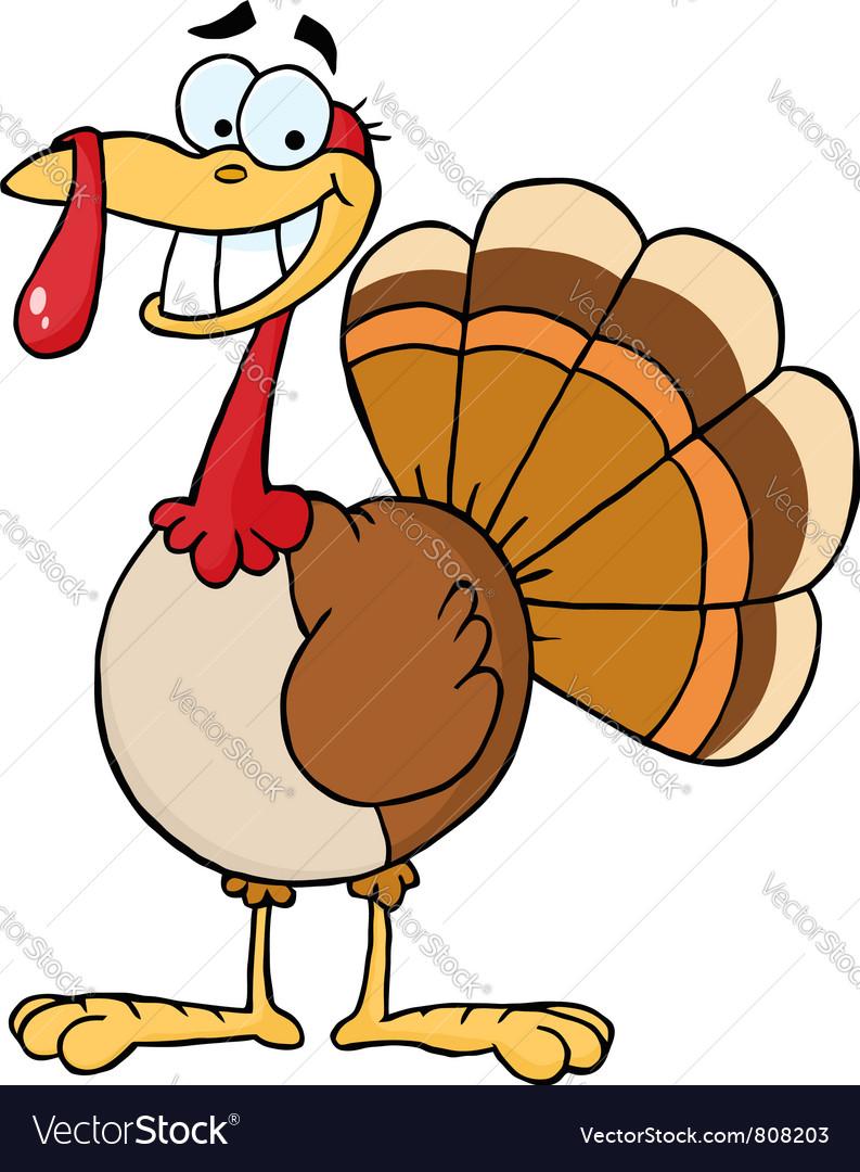 Turkey Cartoon Character vector image