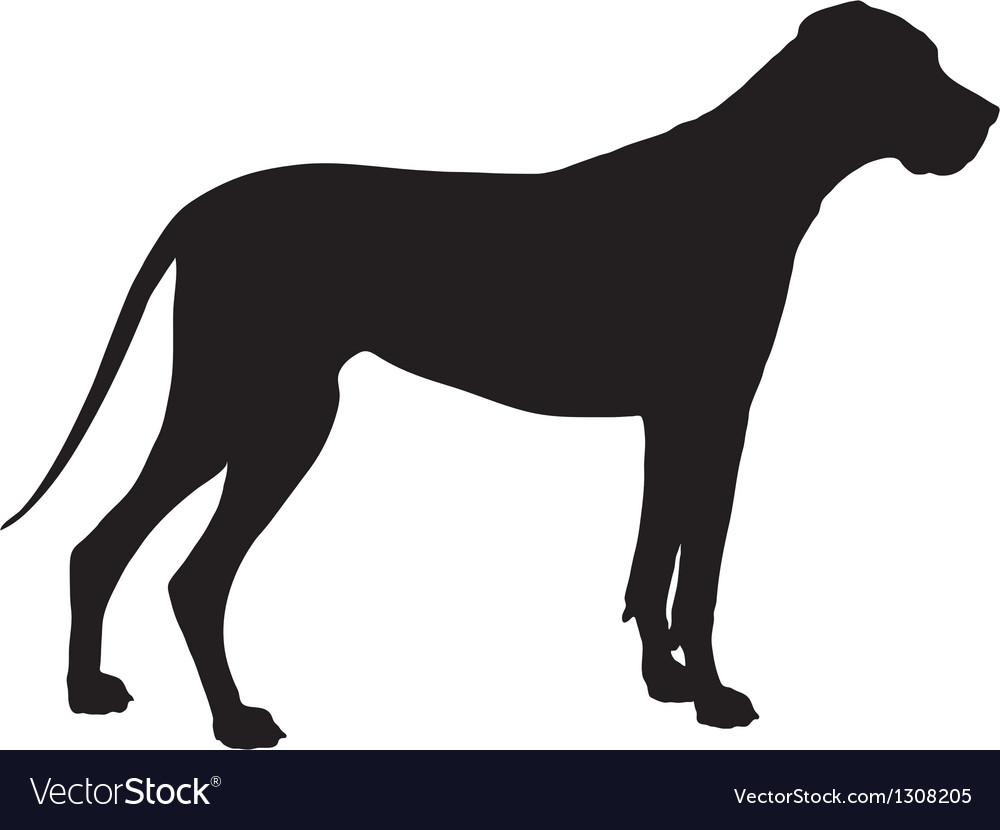 Great Dane Silhouette vector image
