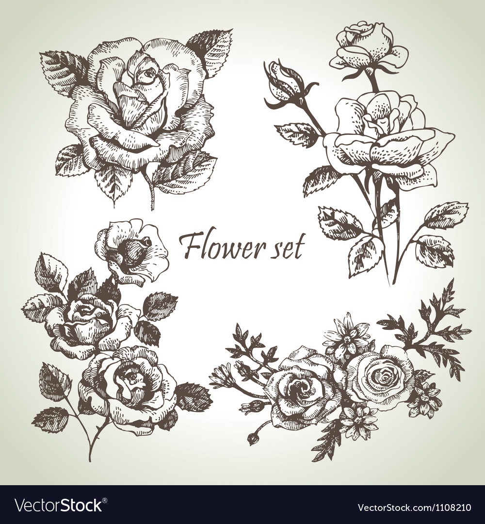 Floral set hand drawn of roses vector image