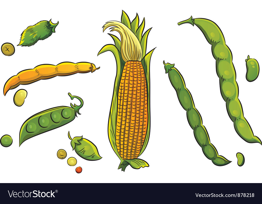 Cereals Collection vector image