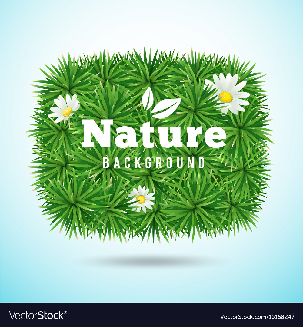 Green grass and flower vector image