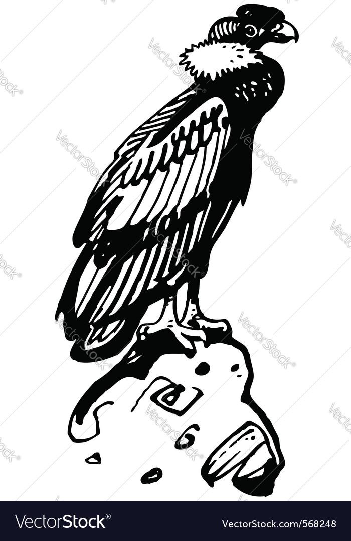 Condor bird vector image
