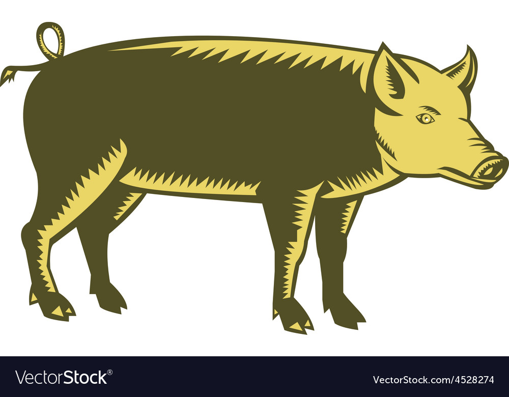Tamworth Pig Side Woodcut vector image