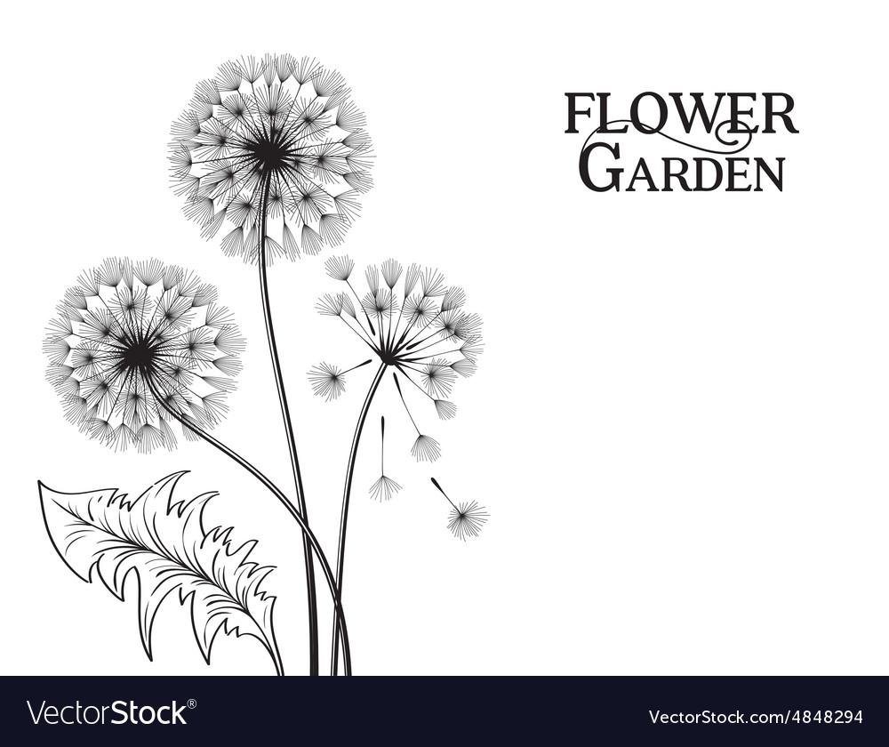 Blowball flower vector image