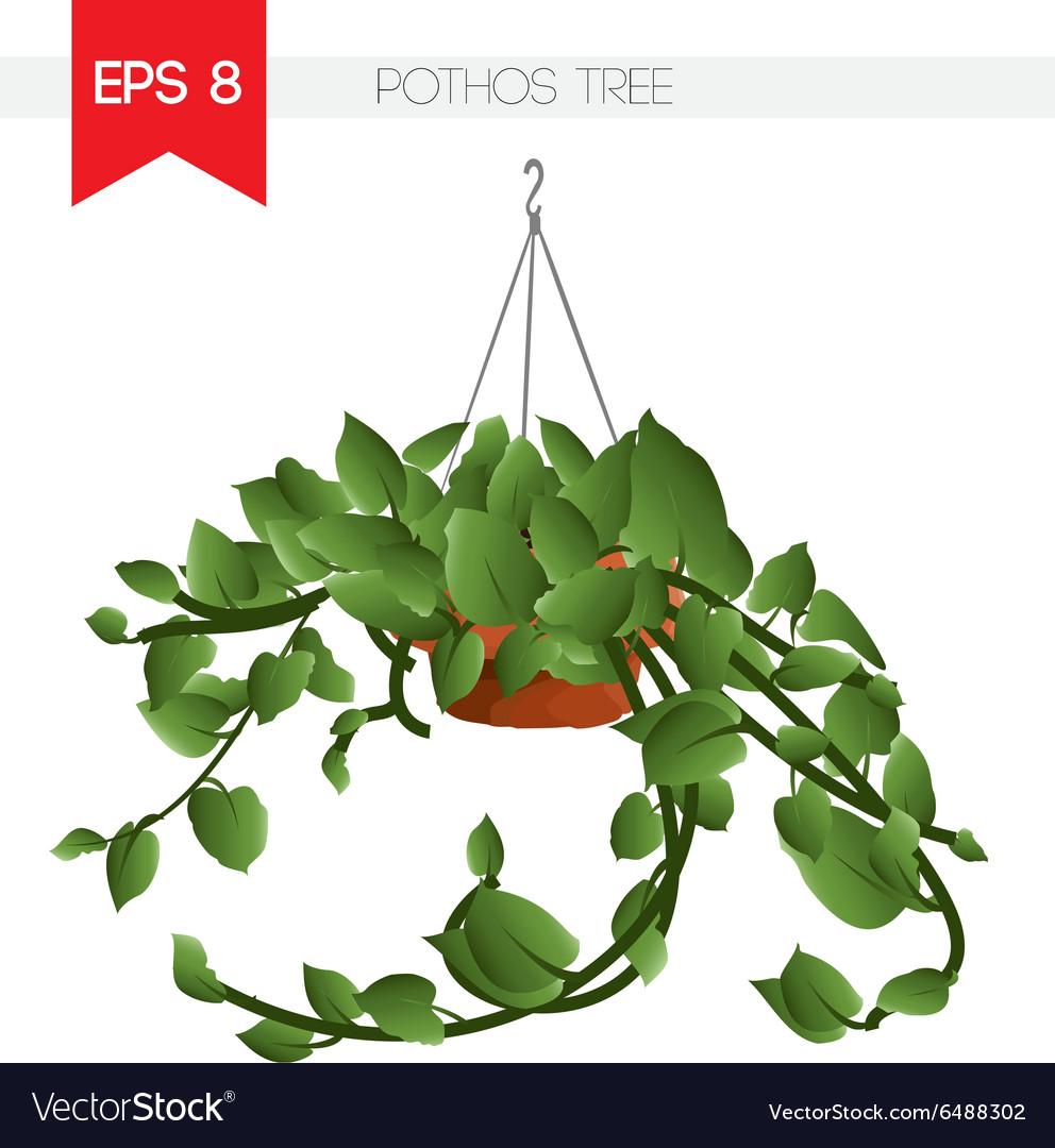 Pothos tree vector image