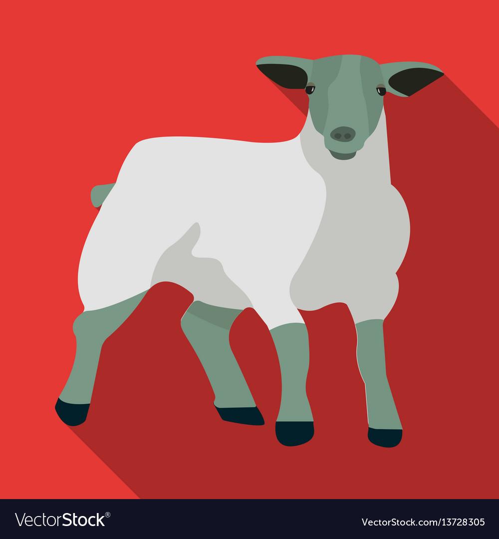 Little white mountain sheepscottish fold sheep vector image